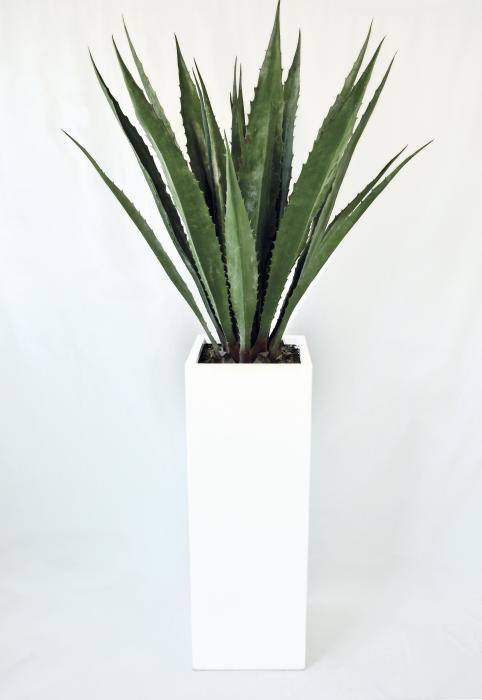 agave intera con vaso