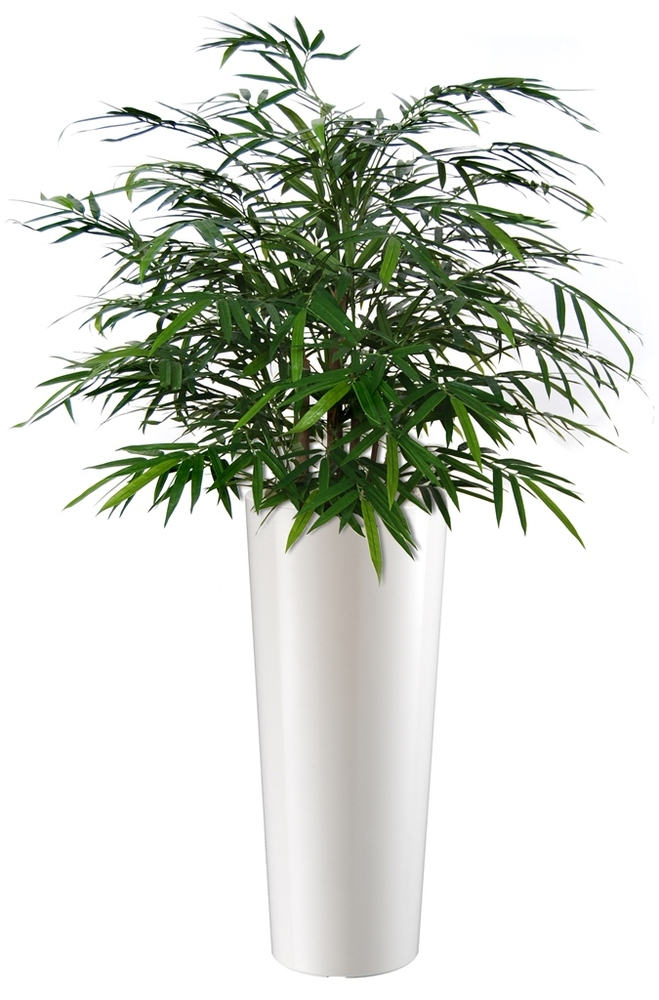Bamboo Japanese Bush 80 cm Green