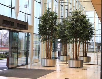 Bamboo_Jumbo_x_5 rods diam 10_h 450_cm_Green_