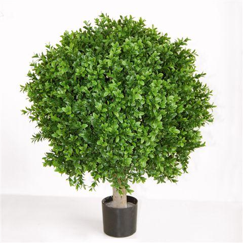 Boxwood Sphera +ÿ 50 h.70 cm Green