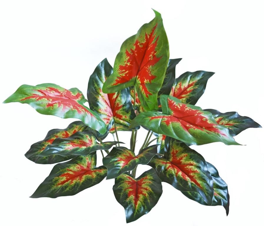 Calladium Bush 45 cm Green Red