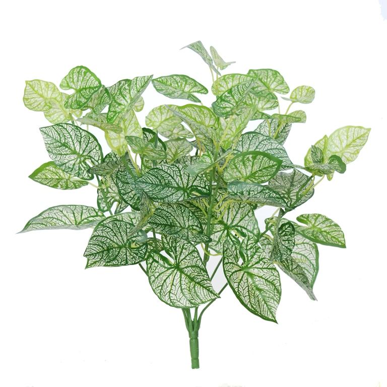 Calladium Bush 48 cm Green Withe