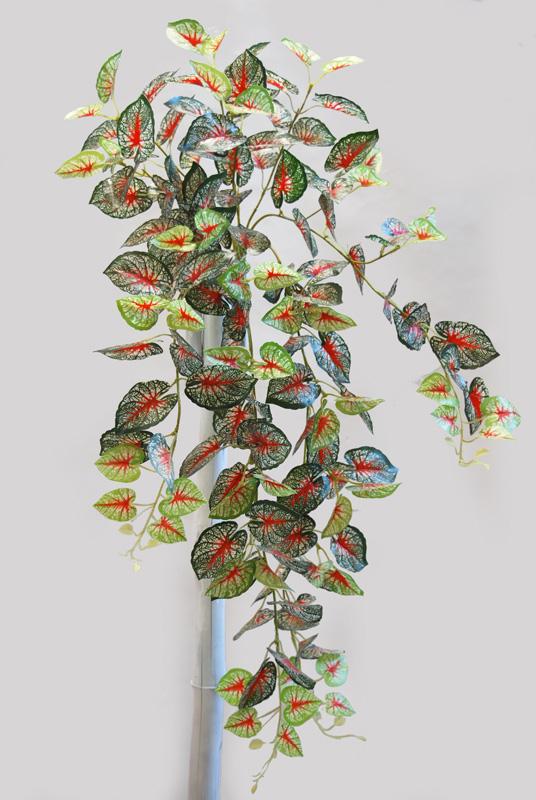 Calladium Bush 90 cm Green Red
