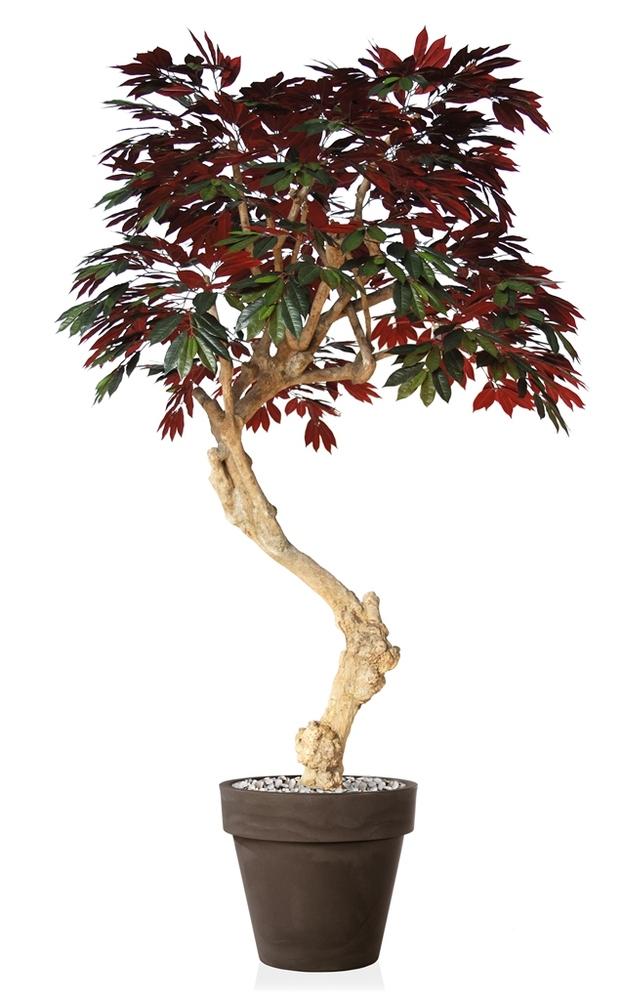 Capensia Nidra 250 cm Green Red