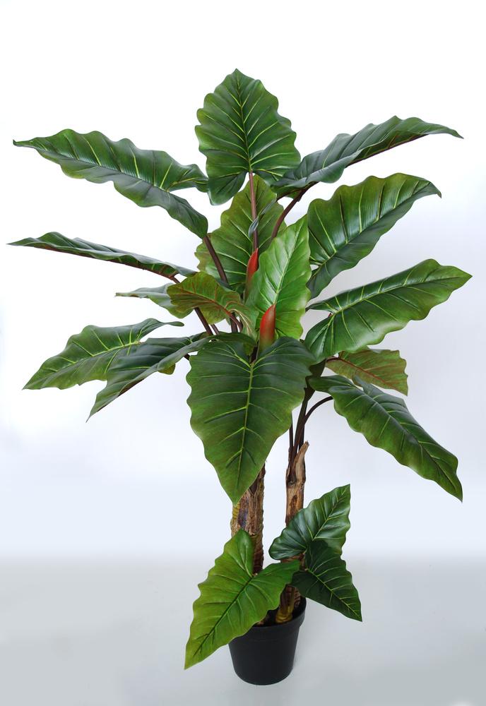 Emerald Philo Plant w pot 170 cm Green