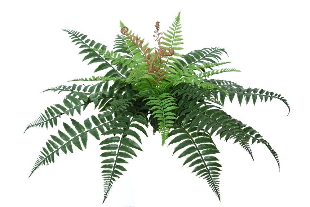 Fern Forest 30 cm Green
