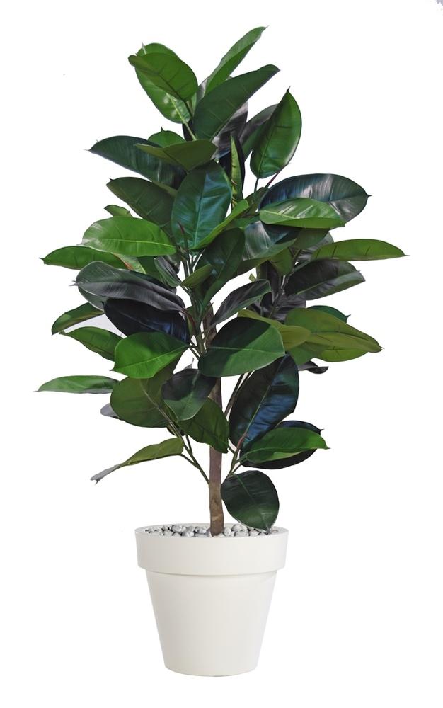 Ficus Elastica Plant 120 cm