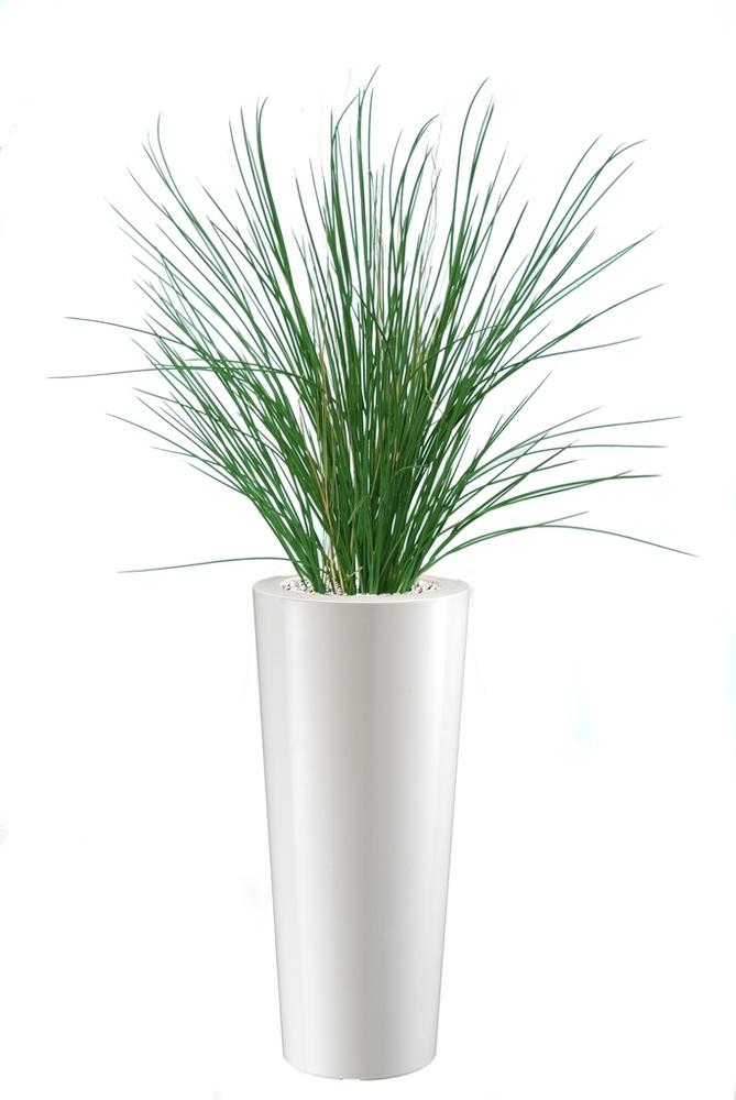 Honey Grass  130 cm Green