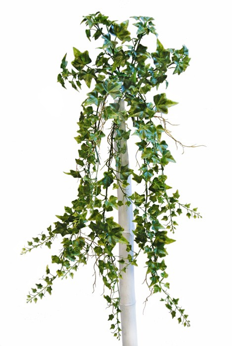 Ivy Bush 95 Cm Green