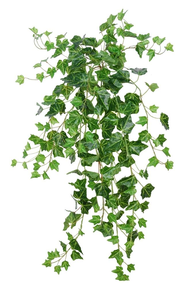 Ivy French 80 cm Green