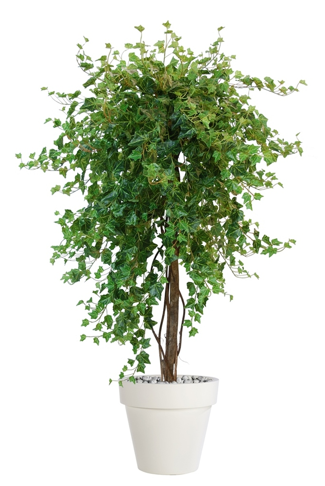Ivy French Topiary 170 cm Green