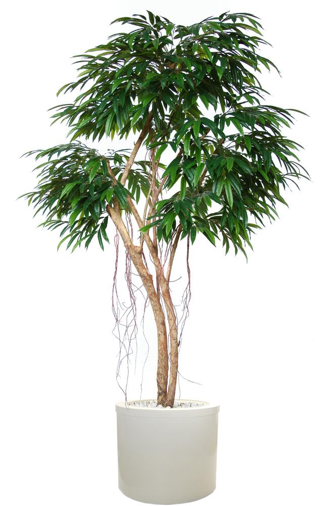 Longifolia Mini Florida 240 cm Green