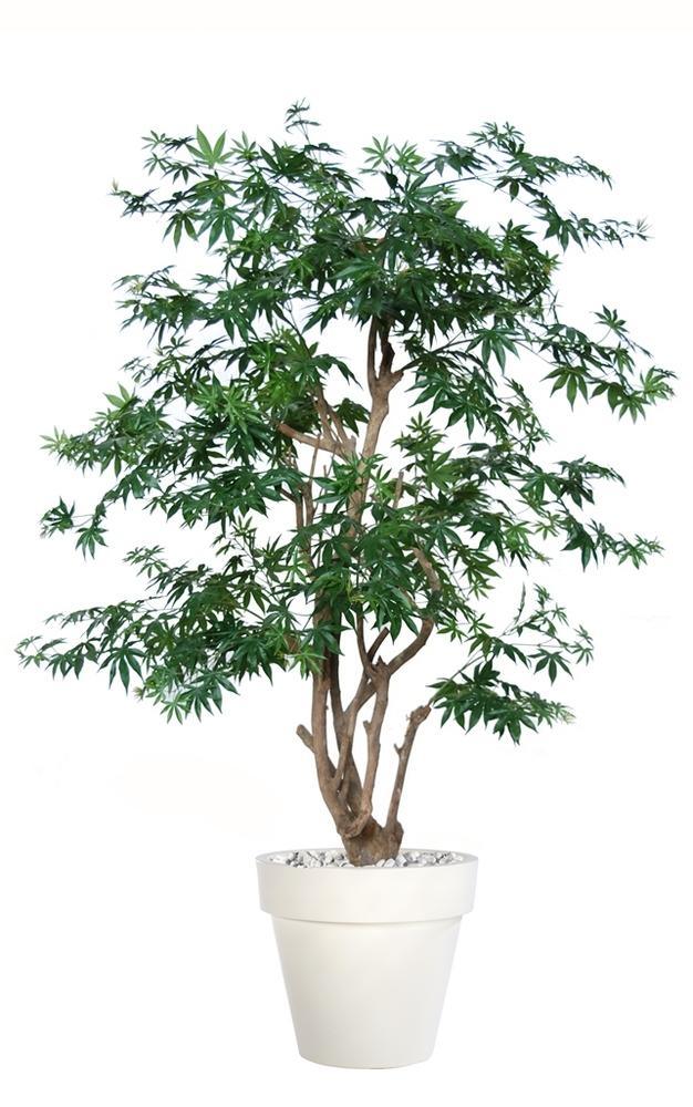 Maple Stylish 170 cm Green