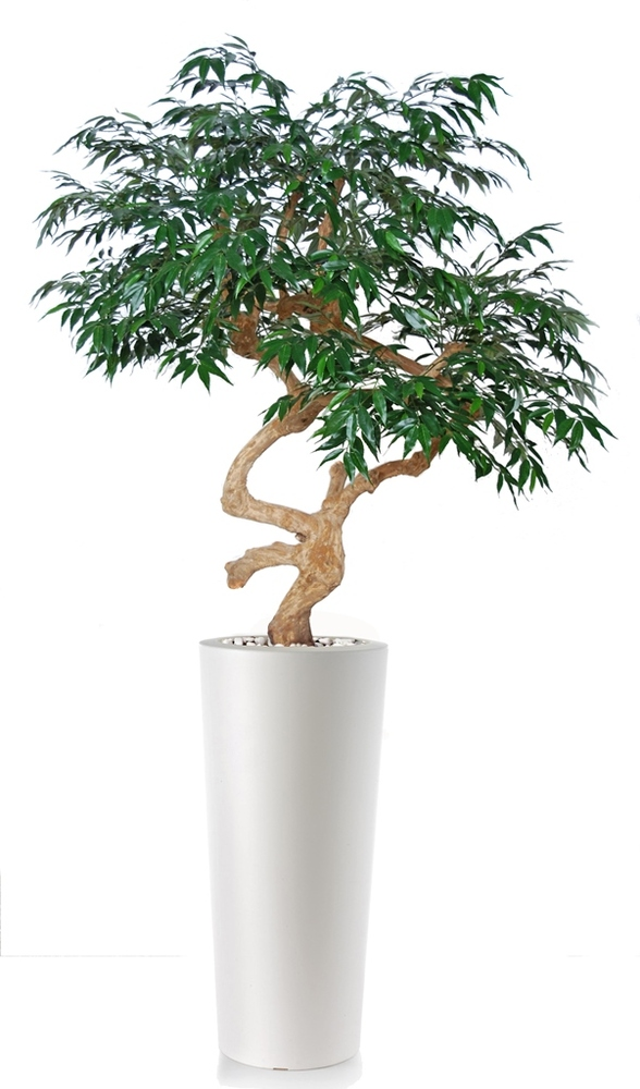 Myrsifolia Crown 200 cm Green
