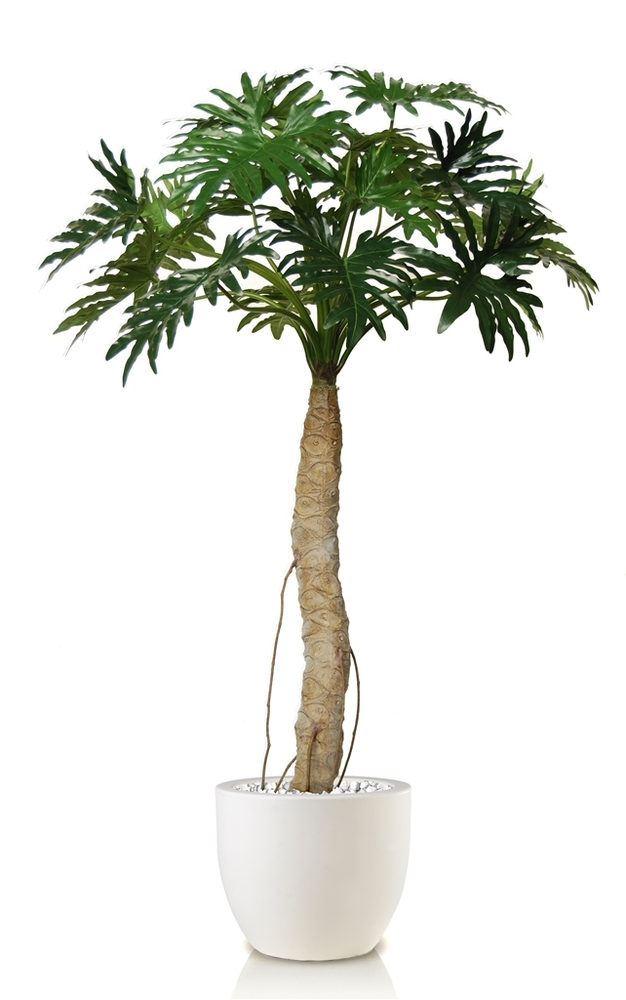 Philodendron Sellonum 200 cm Green