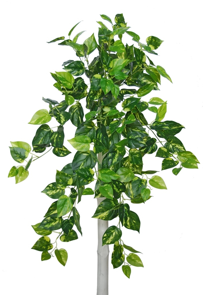 Pothos Bush 90 cm Variegated