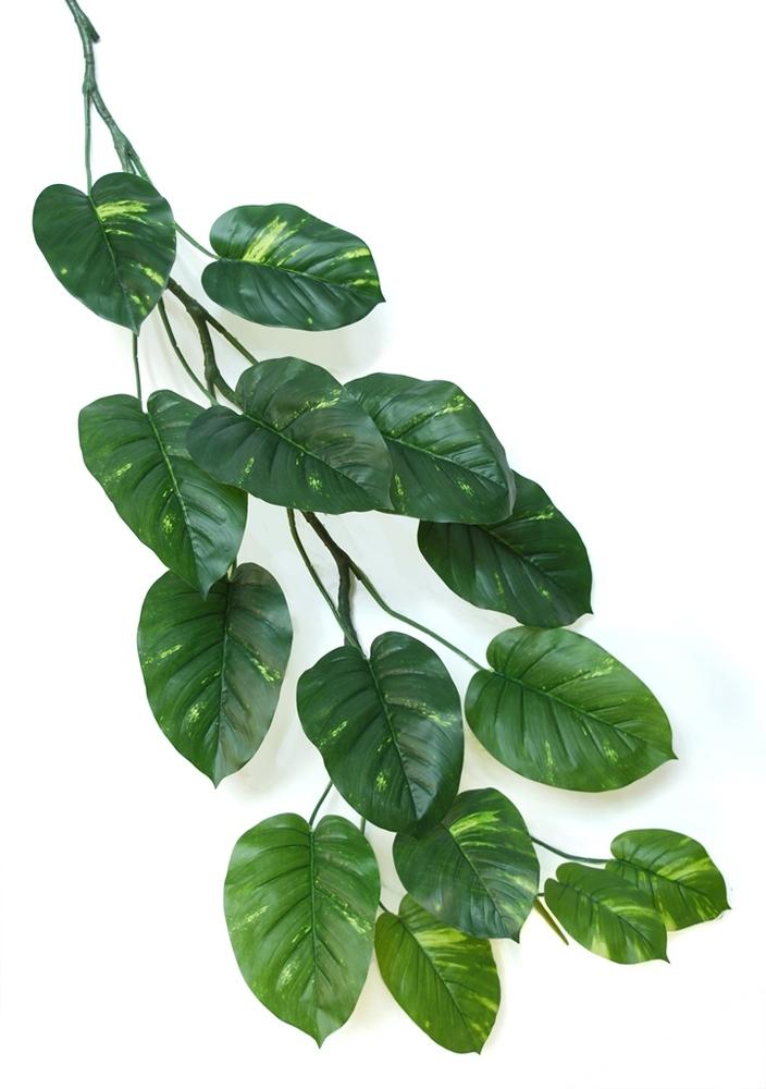 Pothos Vine 140 cm Green