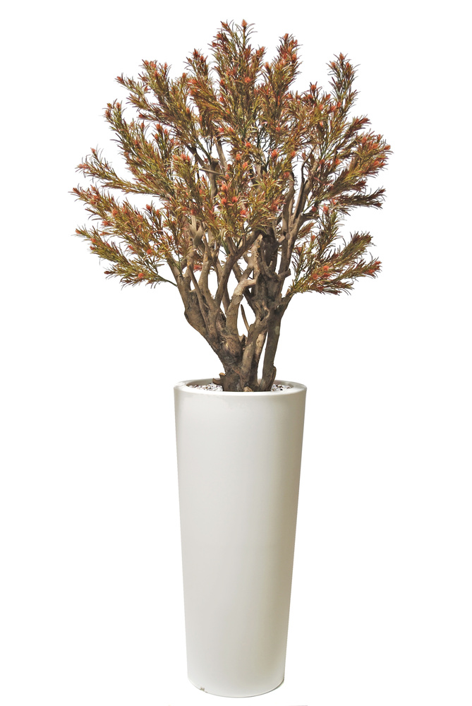 Protea Mini Robusta 180 cm Multicolor
