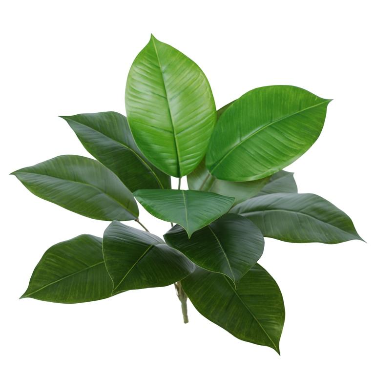 Rubber Plant 40 cm Green