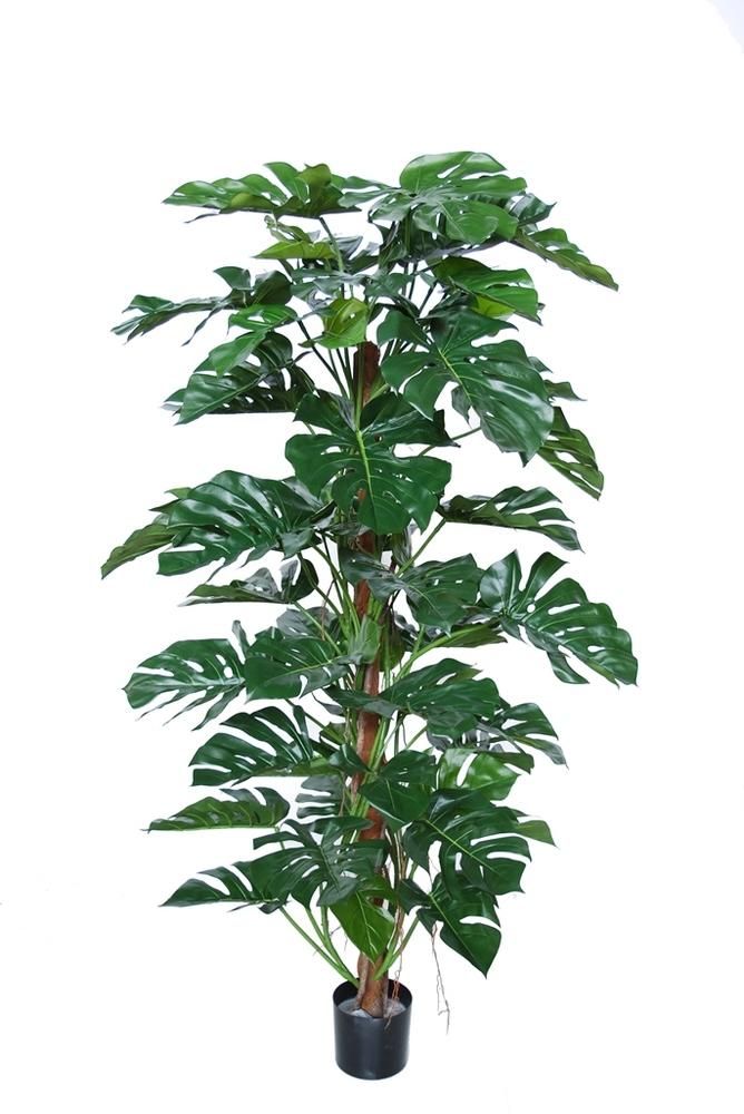 Split Philo Climber w pot 180 cm Green