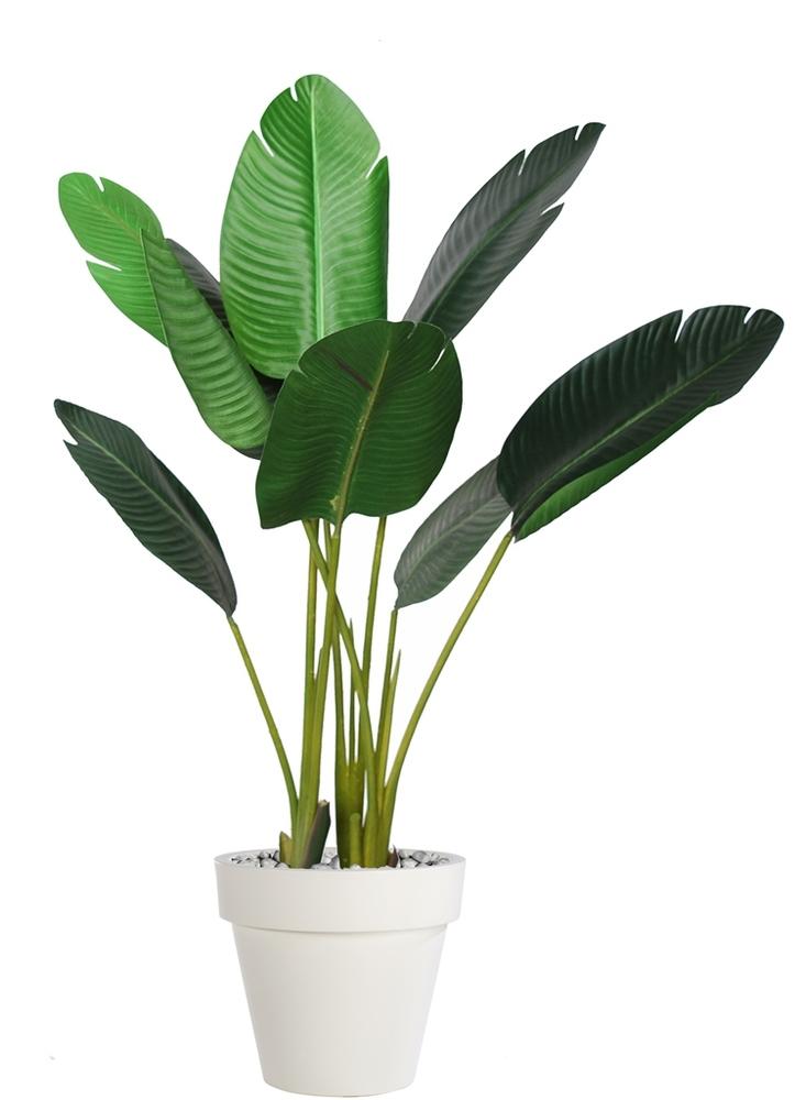 Strelizia Plant 100 cm Green
