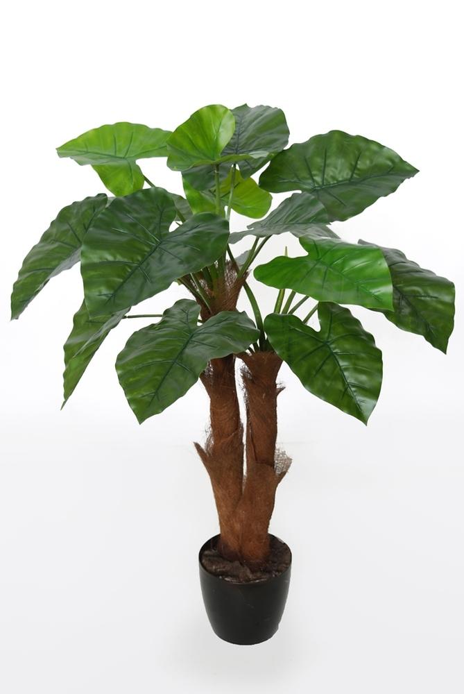 Taro Plant  90 cm Green