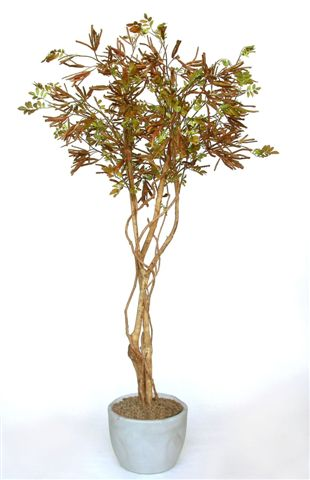Acacia_Tree_W__Liana_200_cm_Brown_V_1317A01