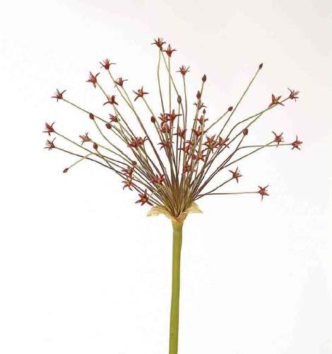 Allium_Shooting_Star_110_cm_Red_1520289