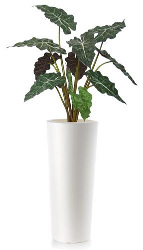 Alocasia Plant   120 cm Green Red