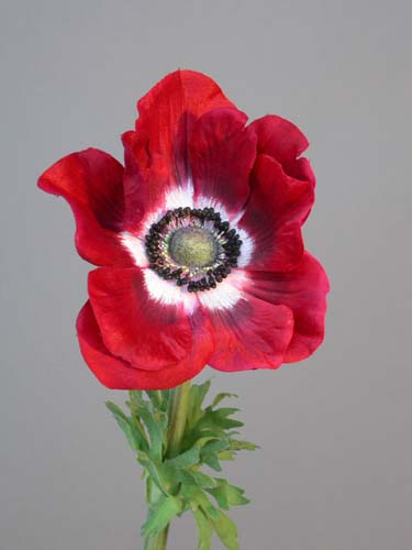 Anemone_60_cm_Red_White_4088RED[1]