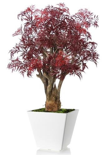 Aralia Robustina 100 cm Burgundy