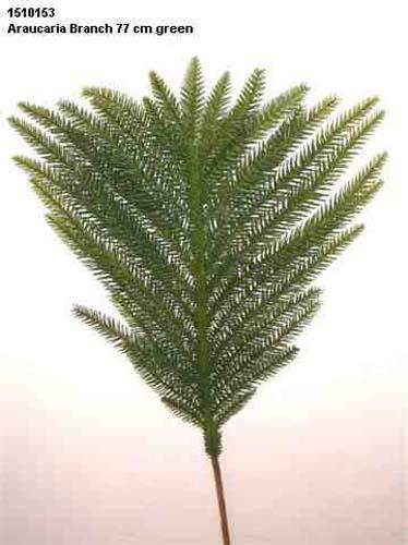 Araucaria_Branch_77_cm_Green_1510153
