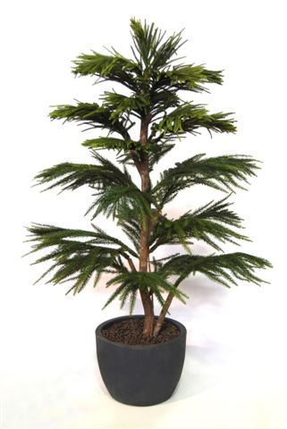 Araucaria_Multistep_150_cm_Green_V_1511A02