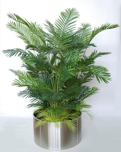 Areca Boschetto 190 cm Green