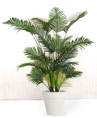 Areca Palm 180 cm Green