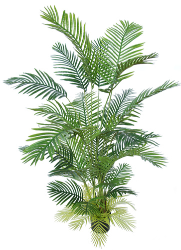 Areca Palm w pot 180 cm Green