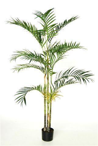 Areca_Palm_x_4_210_cm_Green_4514GRN
