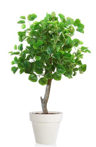 Aspen Topiary 120 cm Green