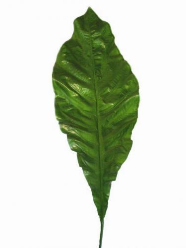 Asplenium_Nidus_Leaf_135_cm_Green_4203GRN