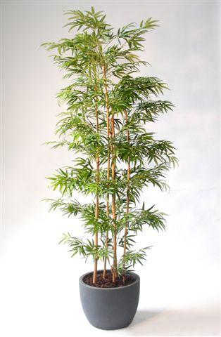 Bamboo_Arr_x_4_Trunks_180_cm_Green_V_1001A03