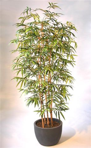 Bamboo_Arr_x_5_Trunks_220_cm_Green_V_1001A04