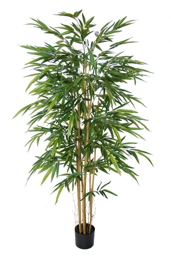 Bamboo Arrang w pot 180 cm Green