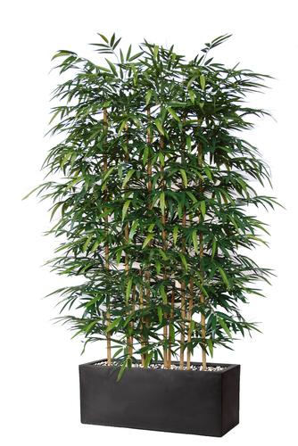 Bamboo barriera h 210 cm