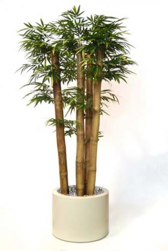 Bamboo_Jumbo_x_4_Trunks_250_cm_Green_1044006