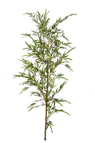 Bamboo Single Tree 160 cm