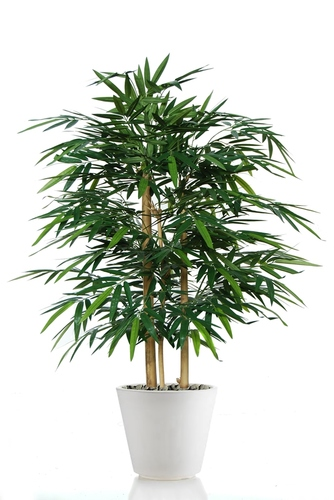 Bamboo Wild Bush 120 cm