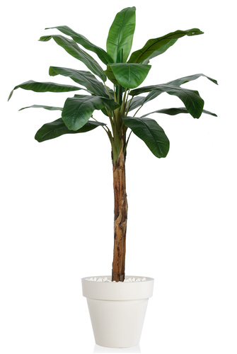 Banana Tree 200 cm Green