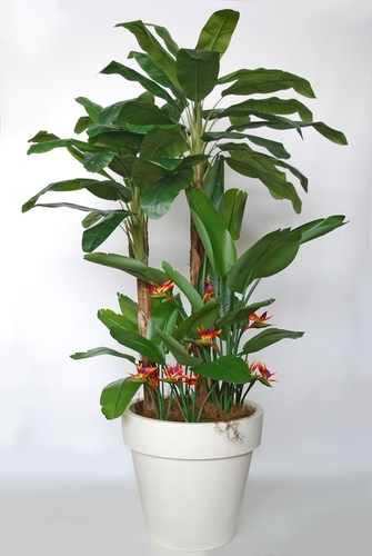 Banana Tropical Arrang 280 cm Grn Ora