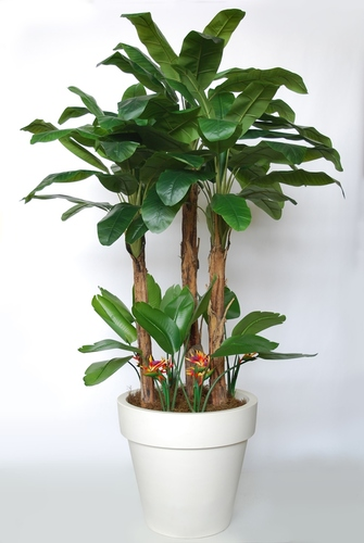 Banana Tropical Bush 280 cm Green Oragne