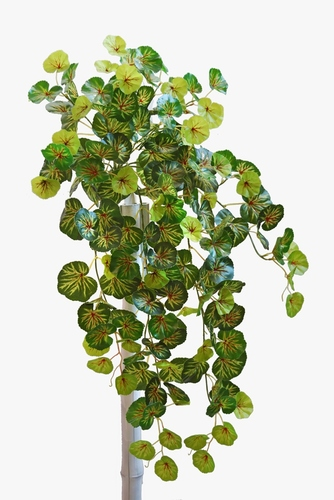 Begonia Bush 90 cm Green Red